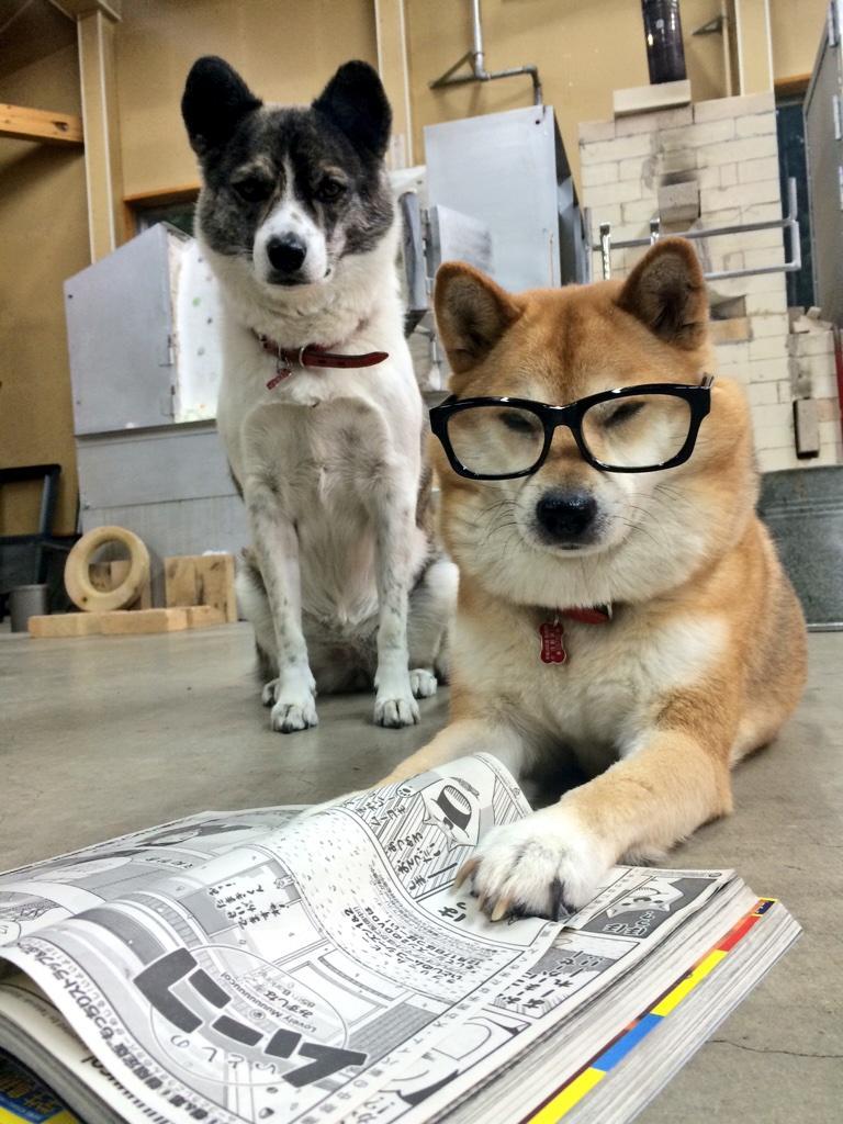おてんき わるいひは どくしょですよ!メガネがじゃまですね…