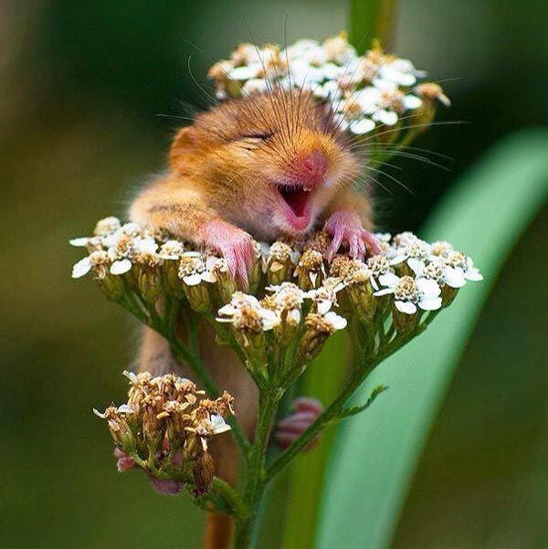 Image result for funny flowers