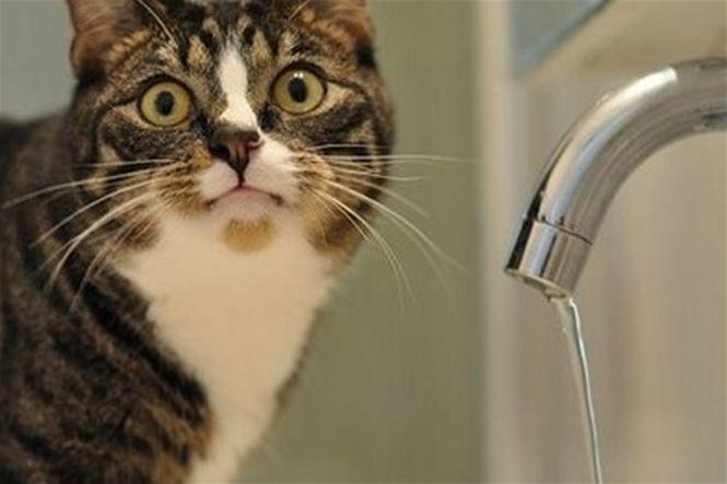 В оккупированной Керчи нехватка воды: запасов хватит на пару месяцев - Цензор.НЕТ 4796