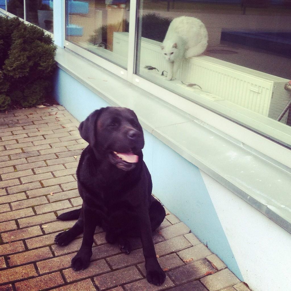 Turītis aicina atsaukties šī labsirdīgā un draudzīgā suņa īpašnieku. Šorīt noklīdis un pašlaik klaiņo Turībā! http://t.co/3qsNfskjTN