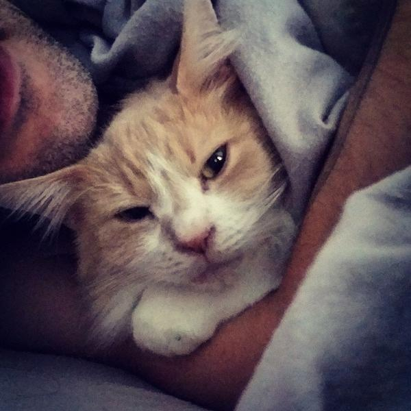 This is, Leo the ex lab cat who was rescued by @HRAust from a lab study. #FightingAnimalTesting http://t.co/DhCv7NOGfE