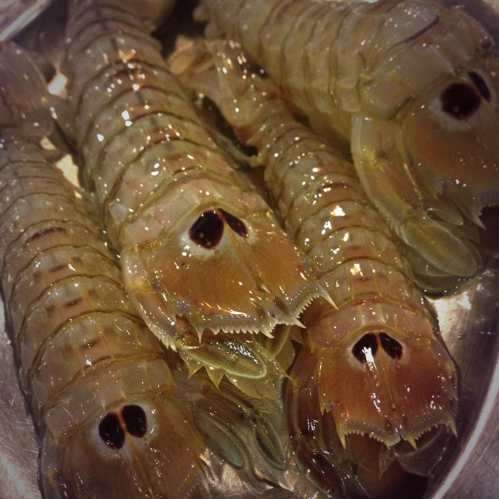 """The sweetest catch of the day, fresh mantis shrimp """"cannocchie"""" served raw with no garnish, incredible #sicilianfood"""