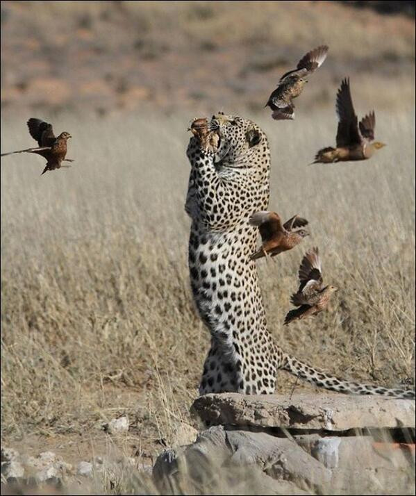 "Incredible shot RT @roblouw6: "" Fast food. http://t.co/mhiTTrsDwy"""