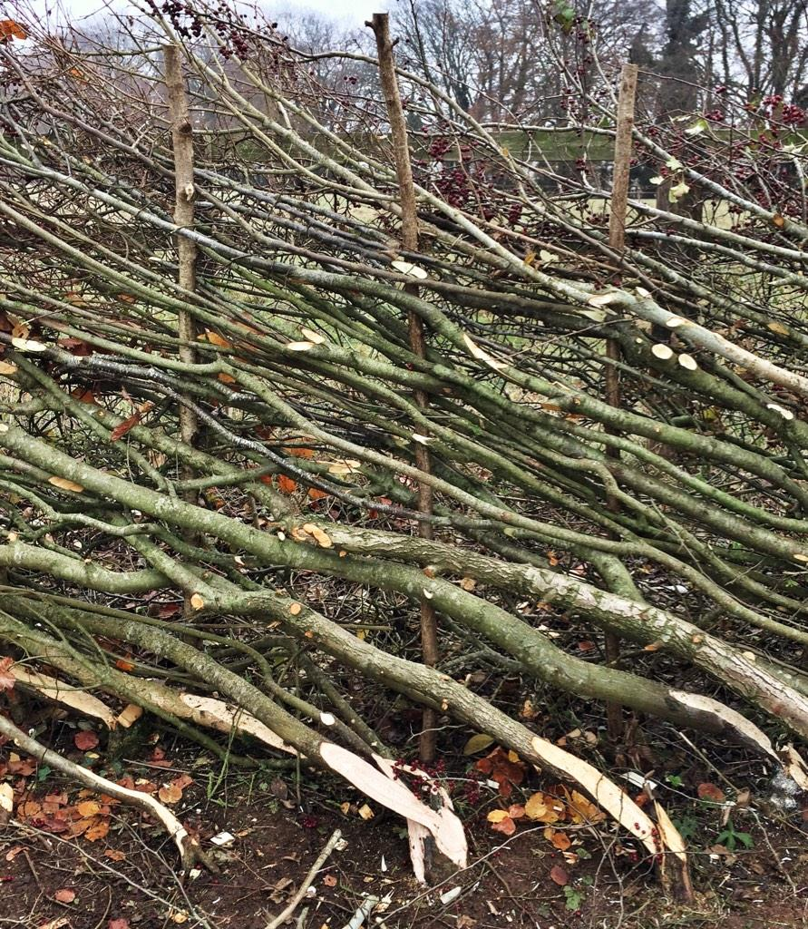 When I'm fired for shitting on the floor, I'm going to take up hedge laying. http://t.co/XJceLelHnJ