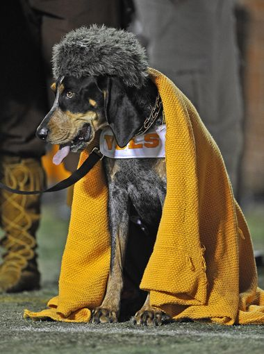 Love RT @Tennessean: Our nomination for greatest mascot photo ever, courtesy of @LarryMcCormack1 #smokey #vols http://t.co/DioHZcN4t0