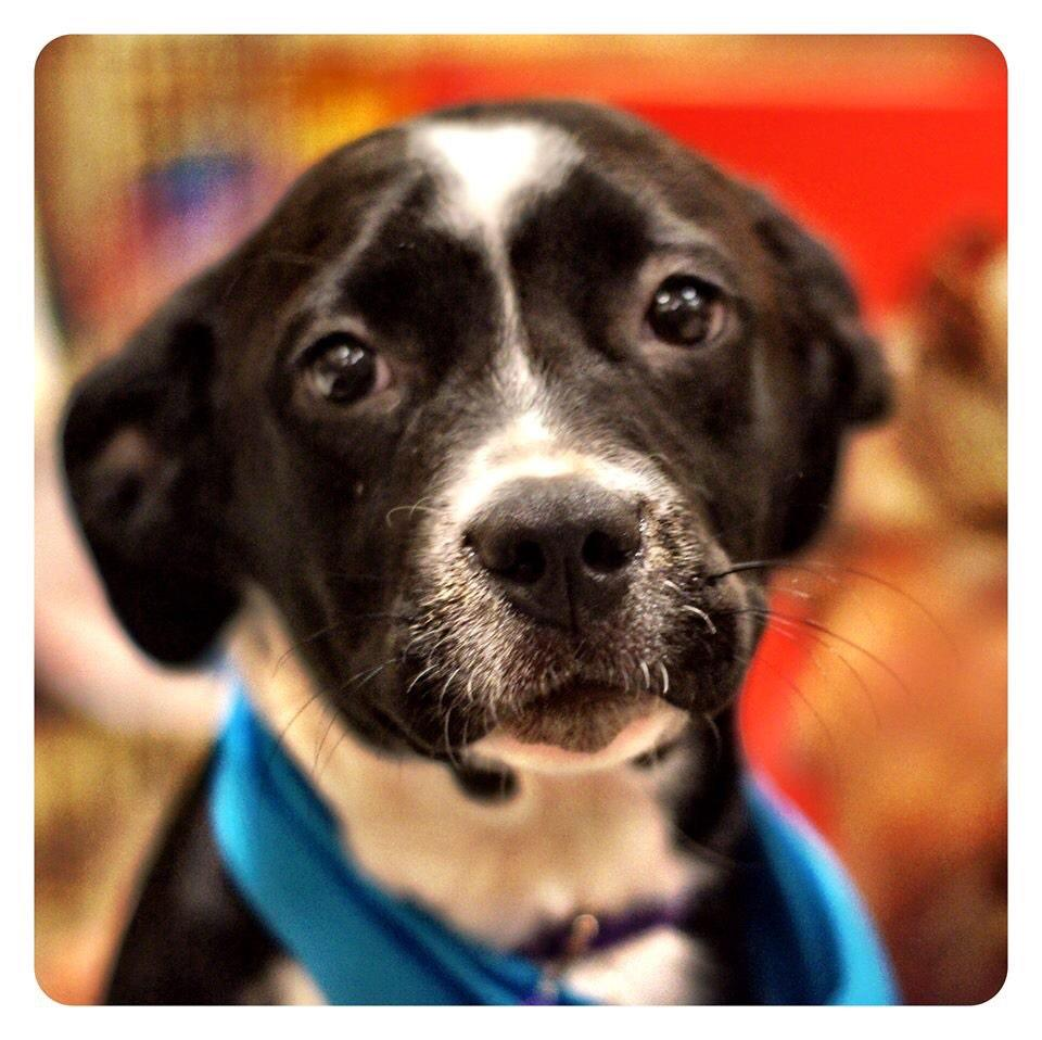 Adopt Cassie Planned Pethood, Inc. : Dogs : Available Dogs http://t.co/mrOQt2NRPm via @sharethis http://t.co/XKv4rseaAN