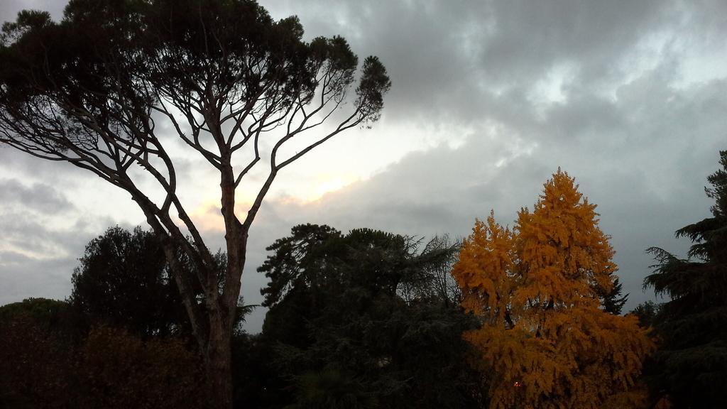 Un #buongiorno umbro... con la bellezza di albero che sa cosa sia il colore. #SensationalUmbria http://t.co/KWbm2Ad4Hk
