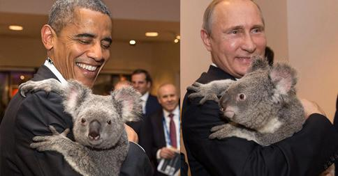 Obama (and a Koala) at the G20 http://t.co/N96XzELlz1 http://t.co/CQ6tVpmCqu