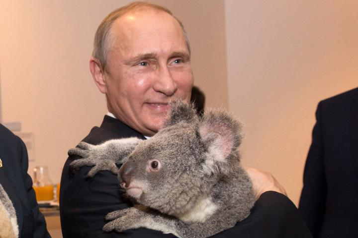 Putin plans to leave the G20 summit early. Not sure what the koala's plans are http://t.co/qh3Q0XYhyk http://t.co/lzKpoGqVvO