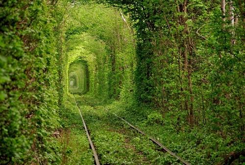 トンネル・オブ・ラブ(ウクライナ) クレヴェンという町に存在するトンネル。ジブリに出てきそうな光景。いまだに電車も走っている。 https://t.co/jPfmyItPT6