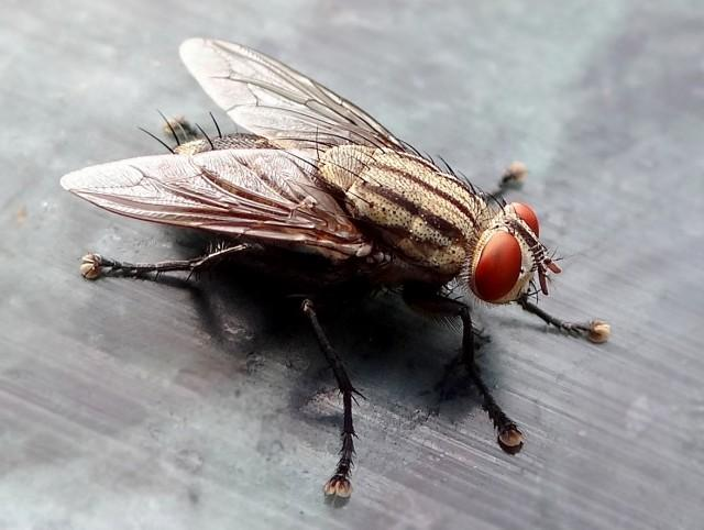 Yum. Housefly larvae scrub antibiotics from manure at factory farms - http://t.co/v7N5RT1oZD by @nonojojo http://t.co/1jXWe3ukXH