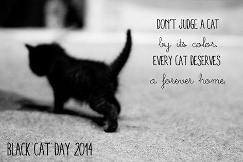 "Today on #BlackCatDay we are reminded that every cat deserves a forever home,regardless of color http://t.co/fTNdbBfRKi""#BLACKCATS"