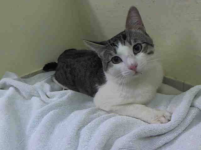 Grisel #NYC #NY #BEGINNER #STRAY http://t.co/EJt08tkbSr #URGENT #FOSTER #ADOPT http://t.co/4HLcCx05qL