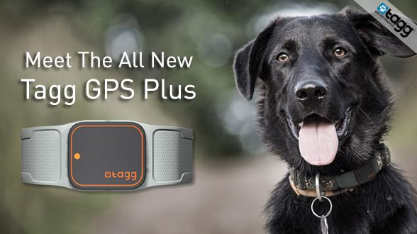 Our Award-Winning #TaggGPS Pet Tracker Is Now Stronger, Longer and Faster: http://t.co/lyLs34RFSH #nomorelostpets http://t.co/x7GKpF6FQO