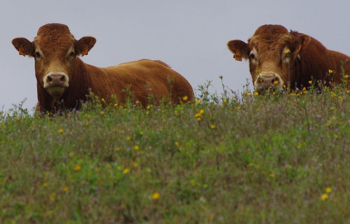 Muore incornata da un toro furioso nella sua Azienda Agricola