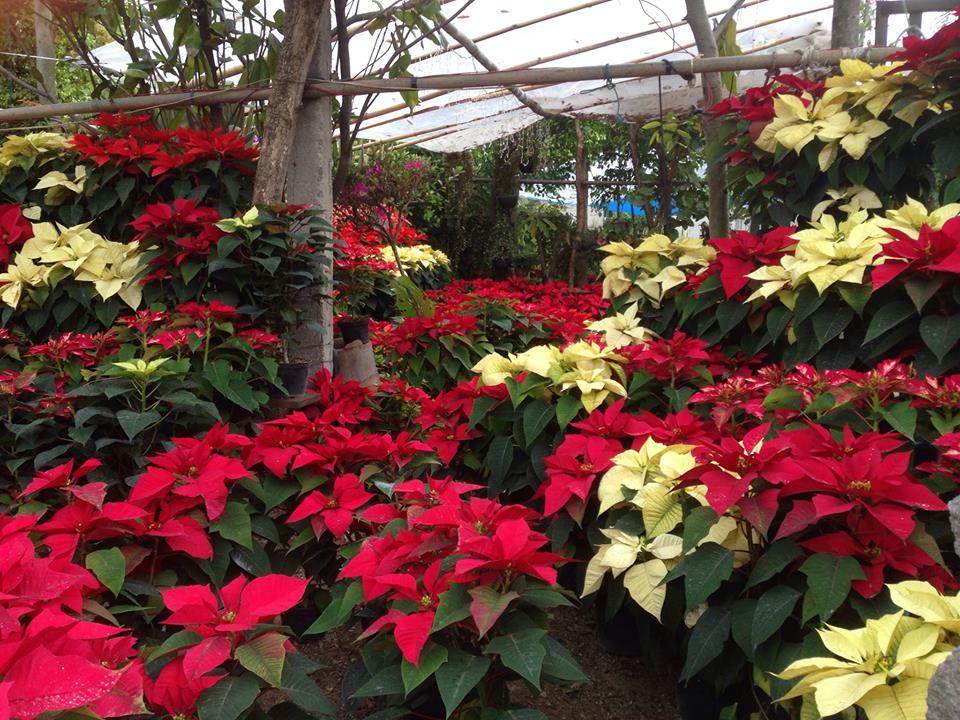 Jiutepec on twitter en jiutepec se esta impulsando en for Produccion de plantas ornamentales