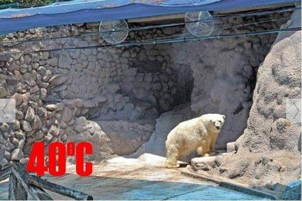 RT @MelitiSiumara: @joannakrupa please sign+share to give #polarbear #Arturo a better life https://t.co/W9Muqt7DeC …#Storm4Arturo http://t.…