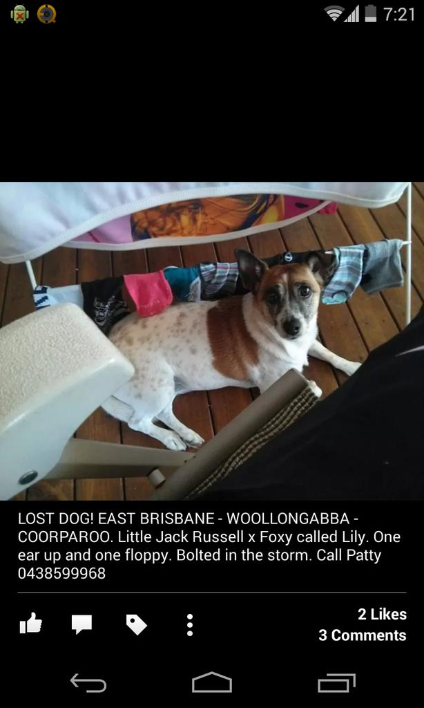 """@PattyBessell: can ya help? #LostDog in East Bris near the Gabba. Call Patty on 0438599968 http://t.co/fFcZERBS2n"""