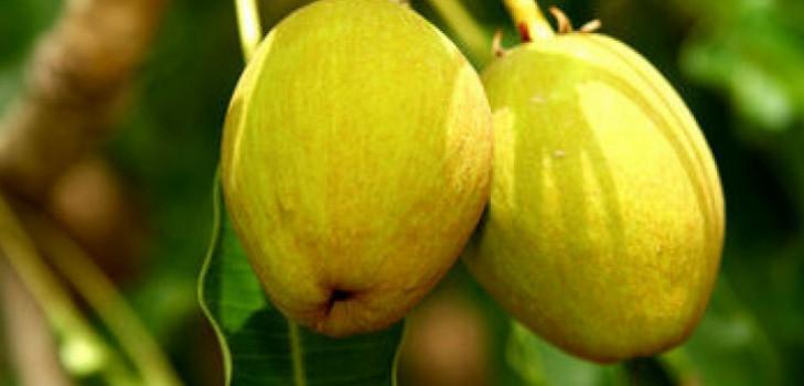 масло для тела густое бразильское розовое для похудения отзывы
