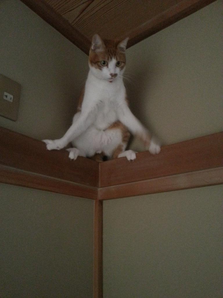 猫の前肢てこんなに開くんだね…自分で降りてね pic.twitter.com/t52aNzF0iq