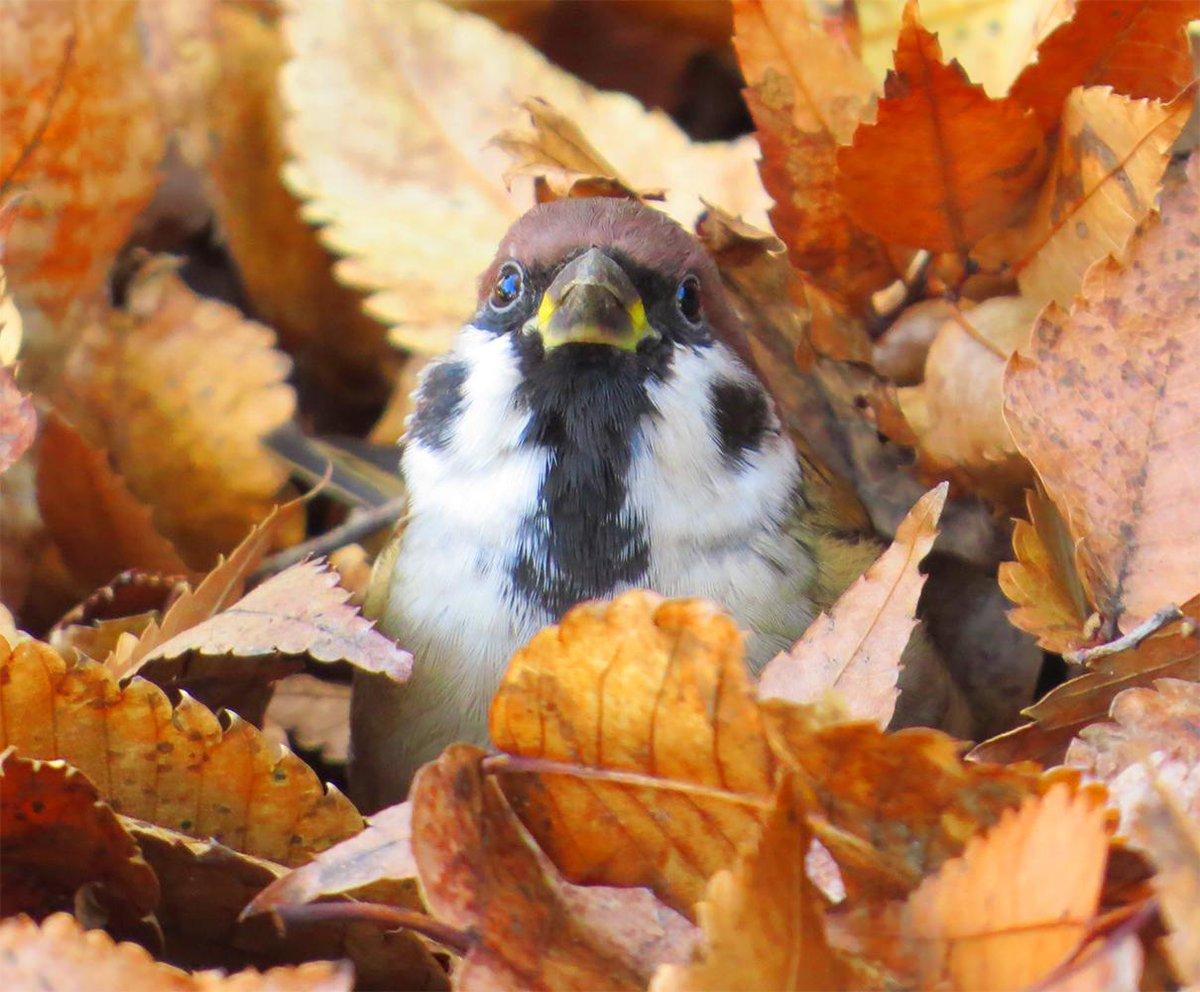 枯れ葉から顔を出してるすずちゃんが超絶可愛かった http://t.co/KSuw31vbLb