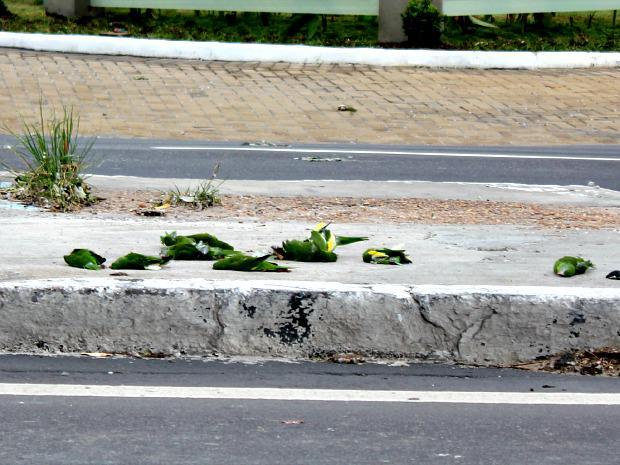 Necropsia em periquitos mortos no AM aponta hemorragia, diz veterinário http://t.co/ziDUNkAajl #G1 http://t.co/PYQTCjQGe9
