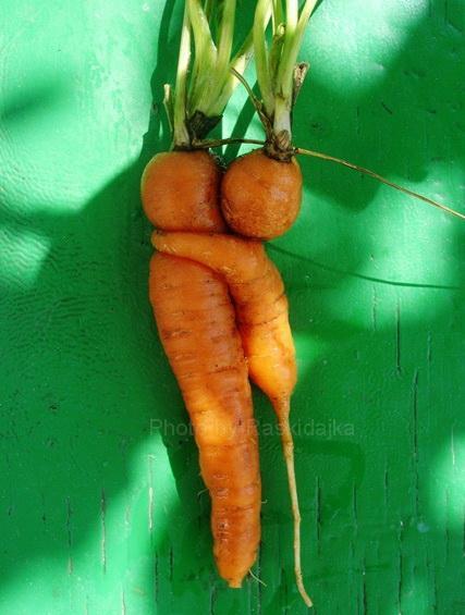 Любовь морковь картинки смешные
