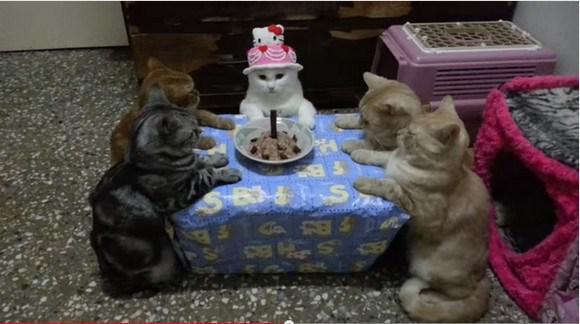 猫のために開かれた誕生パーティが「邪教の儀式」にしか見えないと話題 http://t.co/2z2HB5XnID @RocketNews24さんから http://t.co/dTAJHIg4uU