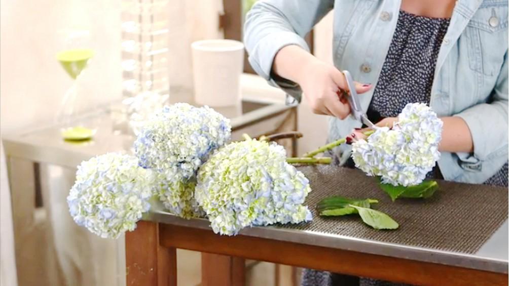 #Video: 7 tips for making your hydrangeas last longer: http://t.co/GAC0GVhKbe http://t.co/Lds6U6MQei