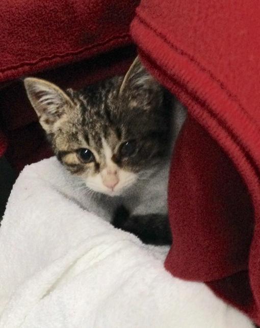 スターケバブの倉庫にいる子猫さん、メス、2ヶ月くらい、左眼がやや白濁、獣医で虫下しと点眼薬と風邪薬もらって投薬中。もらってくれる人、大募集中。 info@kebab.co.jp #akiba http://t.co/0Fog3ieOSt