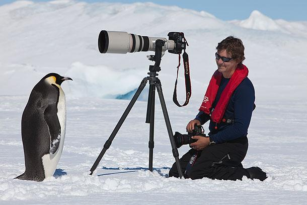 だいたいコウテイペンギンはカメラを怖がらないどころか積極的に近づいてきてそのまんま乗っ取る pic.twitter.com/0hIdvM7LcY