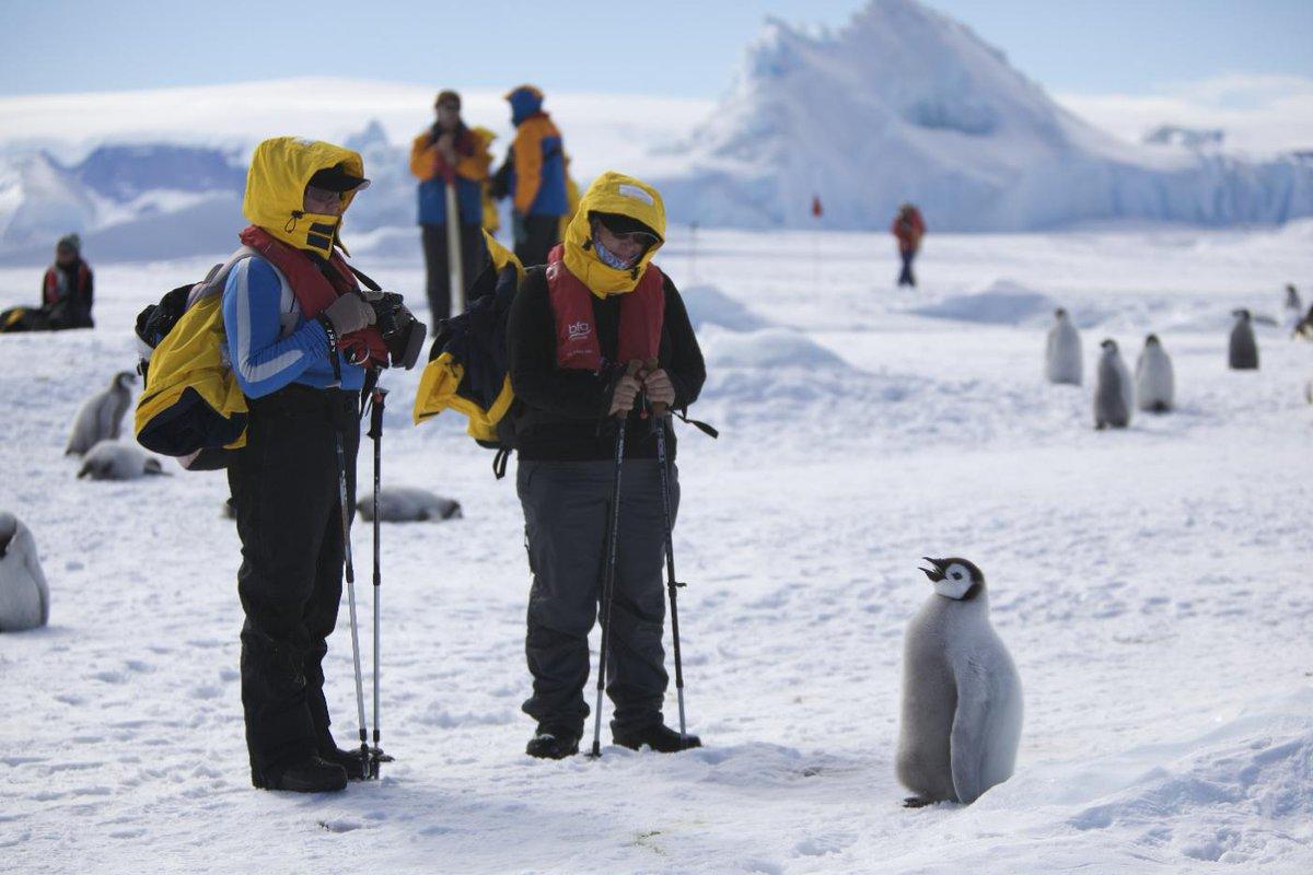 コウテイペンギンは人間に対してはあまり警戒心が無い。ヒナの頃からこんな感じ。 pic.twitter.com/RUj9AVz0Wd