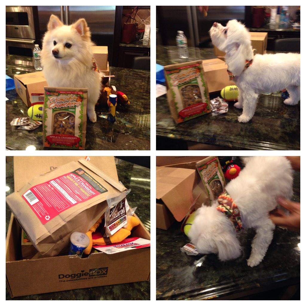 Thank you @dogproduct and @dionneleblanc for the #doggiebox !! Bella Noel and diesel love it! http://t.co/cherrUW0eO