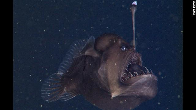 """Rare """"Seadevil"""" fish caught on film for the first time, researchers say. http://t.co/LqPKNA7HiL http://t.co/KmmYG8QFEH"""