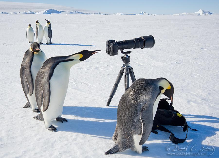 コウテイペンギンにカメラ機材を占拠された結果 pic.twitter.com/1vMYz479cC