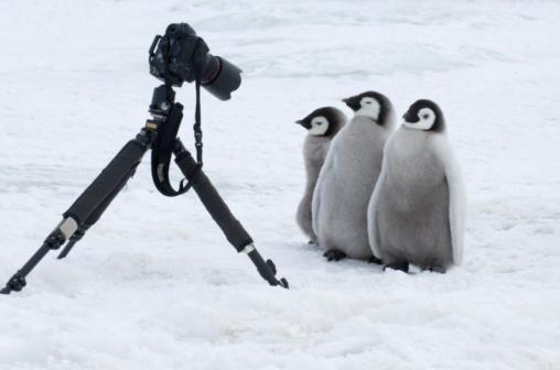 タイマーを使いこなす(?)コウテイペンギンのヒナの図 pic.twitter.com/DUWVYb2RSr