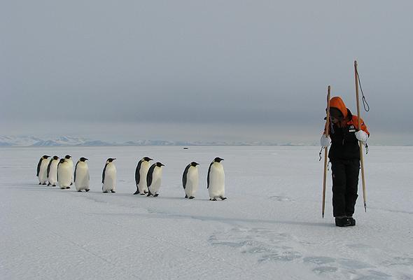 コウテイペンギンは前を歩く二足歩行のものについていく。ちょっとサイズが違っても気にしない。 pic.twitter.com/0g9idSVnJE