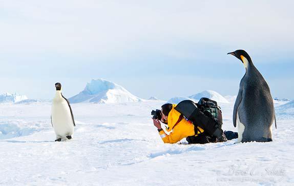 コウテイペンギンを撮ろうとカメラを構えた時、その背後にもコウテイペンギンが迫っているのだ pic.twitter.com/mNA1CbOIIa