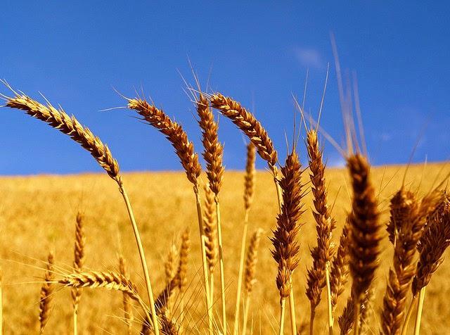 Sicurezza alimentare: le confezioni di farina di mais