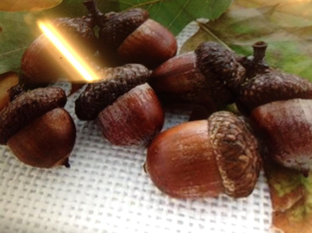#mtgr1  by Olivia ther wr  10 acorns 3 left ther  aer 7 acorns http://t.co/hNQWXc69NP