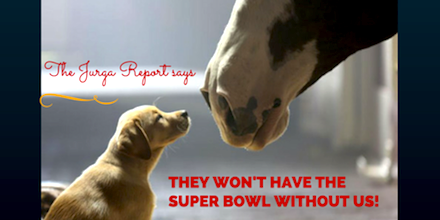 Hooray! @AnheuserBusch: @Budweiser #Clydesdales WILL star in 2015 #SuperBowl commercial! http://t.co/Gr4hE0H1Er http://t.co/MUCxVEmfrZ