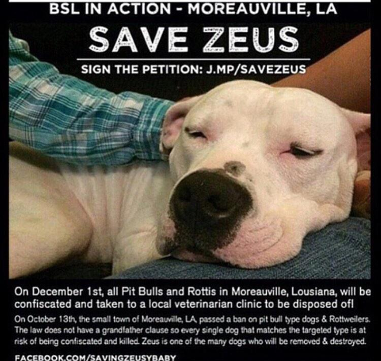 Guys PLEASE sign this petition to save this beautiful Zeus! This is horrible! Please retweet and share. http://t.co/Zj5A3I9LIQ
