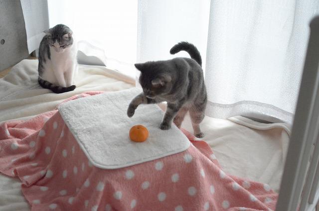 話題の猫用コタツ!作り方が公開ですー!!クッソ可愛いwww画像大量ww  ⇒100均の材料で作った「猫用コタツ」を猫に使ってもらった