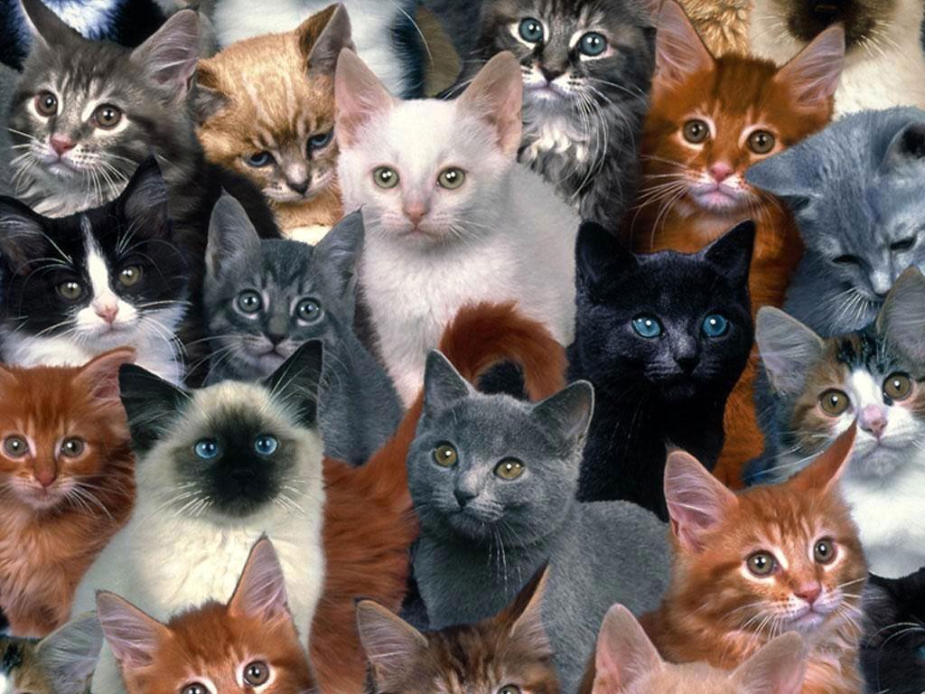 С днем котов картинки с надписями, открытка новые открытки
