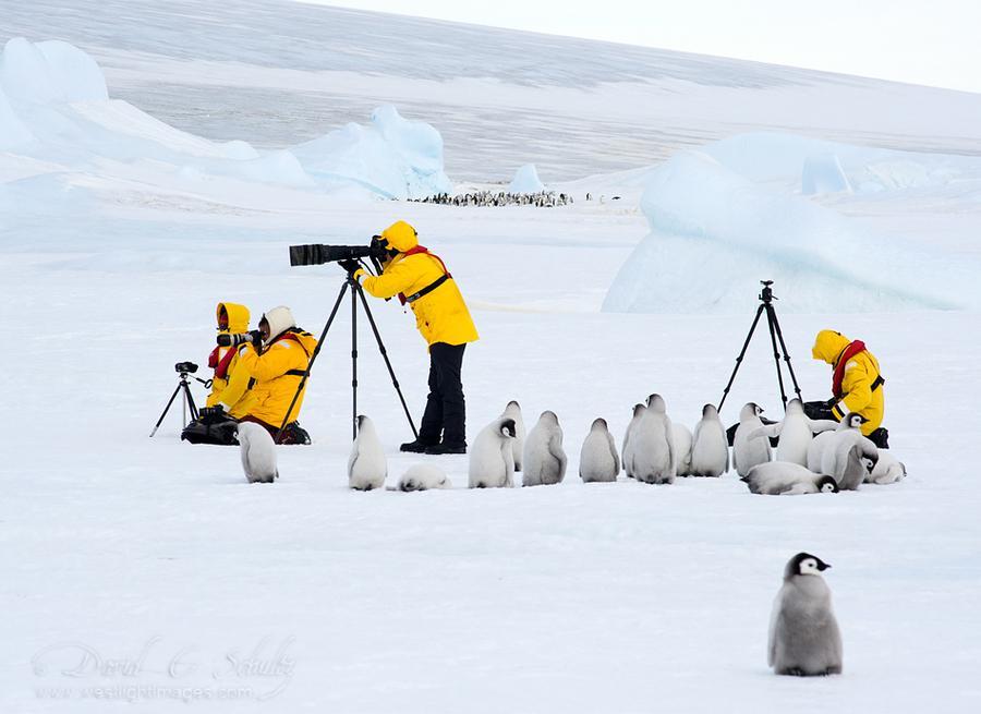 コウテイペンギンのヒナに見学される撮影隊の図。 pic.twitter.com/Xk7GX4j80J
