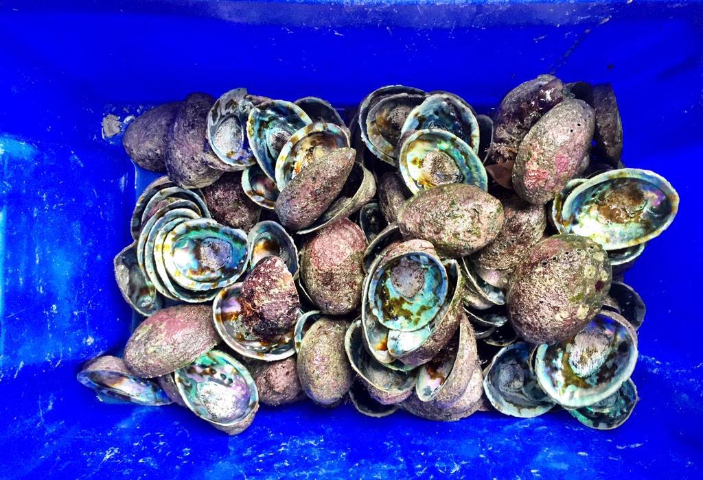 Paua shell mania! #NewZealand http://t.co/XvhiCE6uNQ