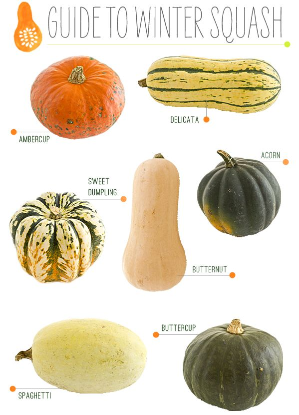 A guide to Winter Squash. For more #kitchentips, follow our @Pinterest board: http://t.co/ETvBMNAWpP http://t.co/RZczumBQZ1