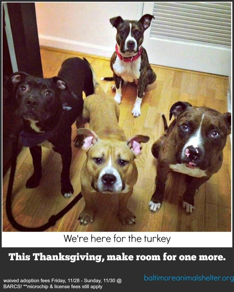 Thank you!   RT @DogRescueTweets: #HappyThanksgiving http://t.co/e0RDKgP1xm