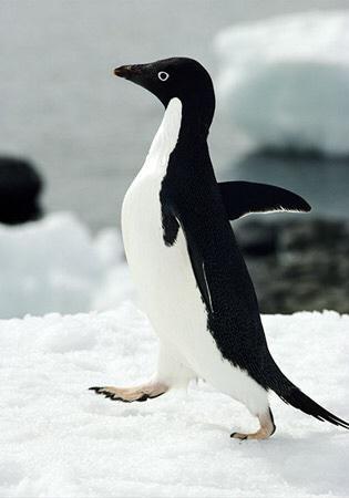 アデレーペンギン可愛さと名状しがたい深淵の者との境目感が凄い。 pic.twitter.com/HojlxjRcFa