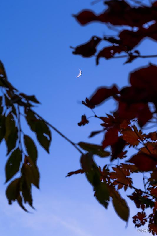 暮れゆく秋の月。先ほど撮影したものです。みなさまのところからも見えますか。 pic.twitter.com/o2MgKlcHwd
